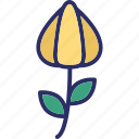 bloom, blooming flower, flower, rose icon