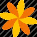 spring, floral, flower, decorative, flora