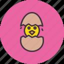 chicken, chickling, cute, easter, egg, hatch
