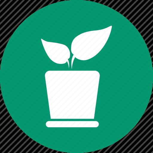 decoration, flora, leaf, natural, nature, plant, pot flower icon