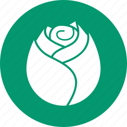 blossom, decoration, flora, flower, nature, plant, rose icon