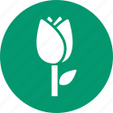 beauty, flower button, greenery, nature, plant, spring, tulip icon
