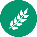 ear, harvest, rice, rye, seed, spike, wheat icon