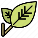 ecology, leaf, nature, environment