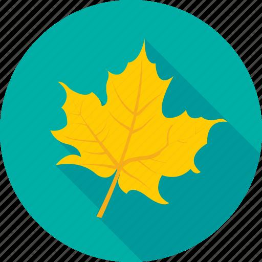autumn, foliage, leaf, maple leaf, nature icon