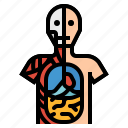 anatomical, anatomy, human, position icon