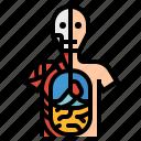anatomical, anatomy, human, position