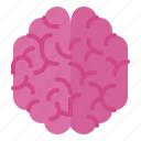 brain, healthcare, human, medical, organ icon