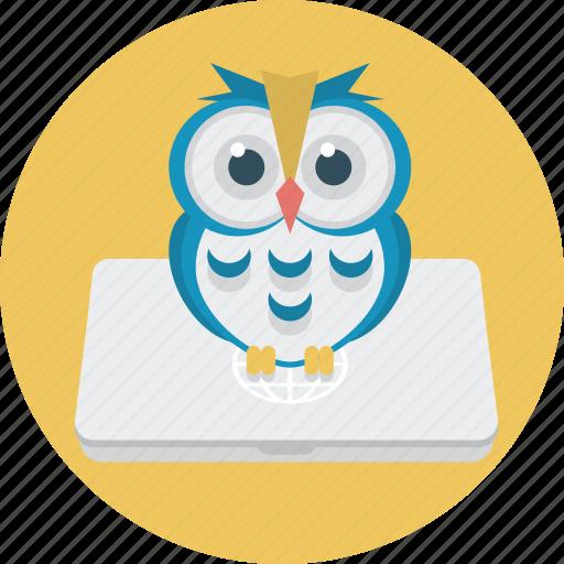 education, laptop, notebook, owl icon
