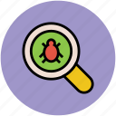 focus, magnifier, magnifying glass, search, search bug, view, zoom icon