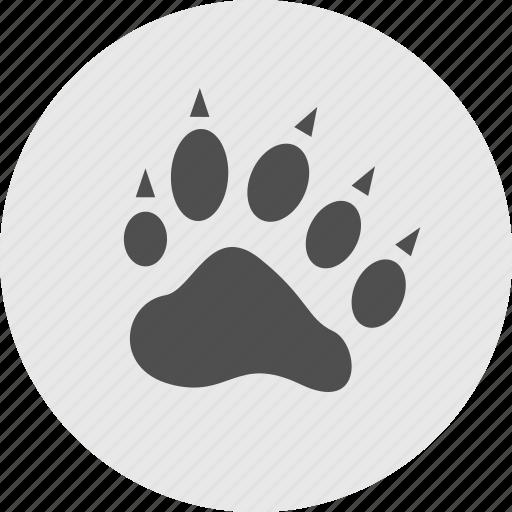 animal, bear, cat, cheetah, paw, tiger icon