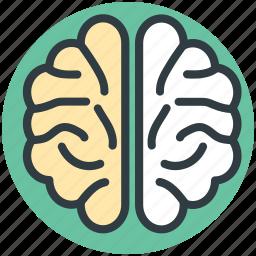 brain, cranium, human head, nervous system, neurology icon