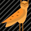ancient, animal, bird, egypt, owl, predator, wild
