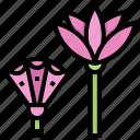 egypt, flower, lotus, plant