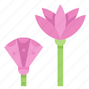 egypt, flower, lotus, plant icon