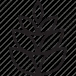 cone, pine icon