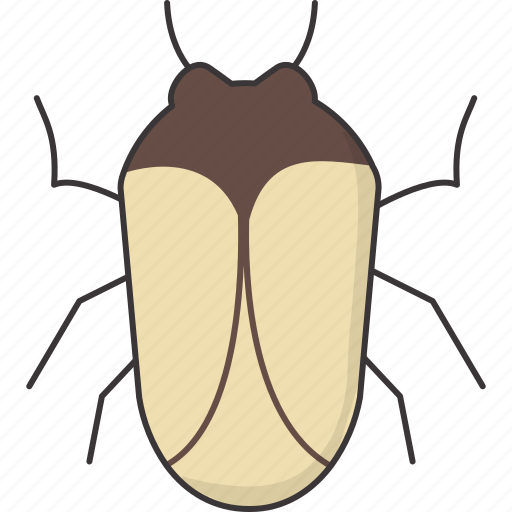 bug, computer icon