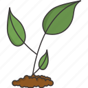 growth, plant icon