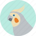 animal, beak, bird, cockatiel, exotic, tropical, wild icon