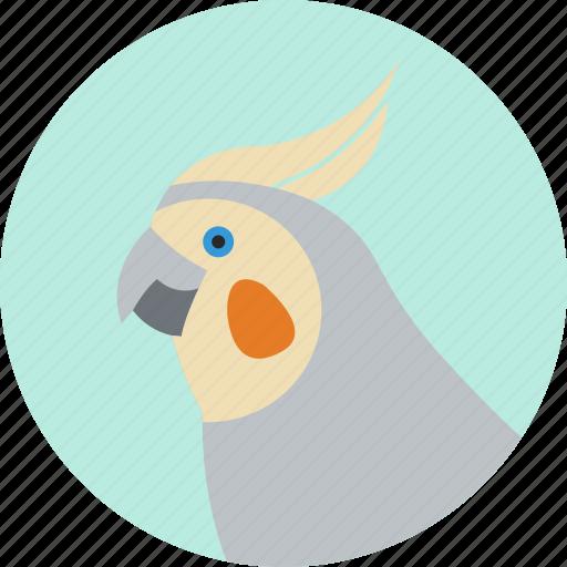 animal, beak, bird, cockatiel, exotic, tropical, wild icon