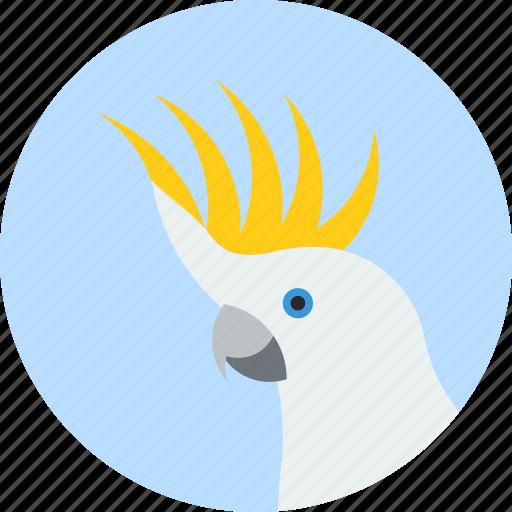 animal, beak, bird, cockatoo, exotic, tropical, wild icon