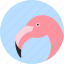 animal, beak, bird, exotic, flamingo, tropical, wild icon