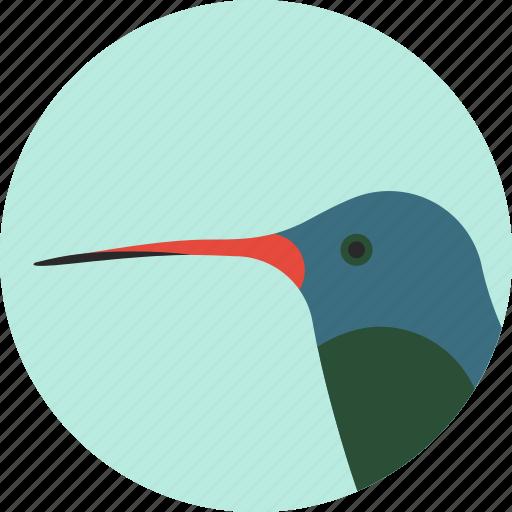 animal, beak, bird, exotic, hummingbird, tropical, wild icon