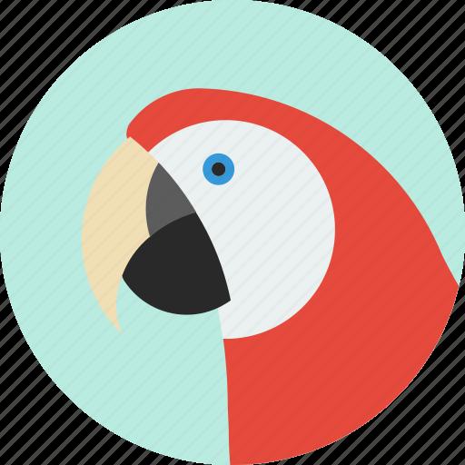 animal, beak, bird, exotic, macaw, tropical, wild icon