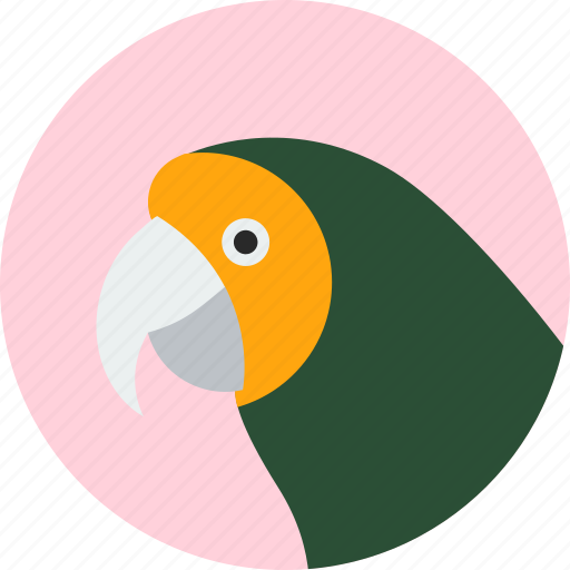 animal, beak, bird, exotic, parakeet, tropical, wild icon