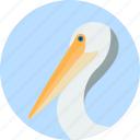 animal, beak, bird, exotic, pelican, tropical, wild icon