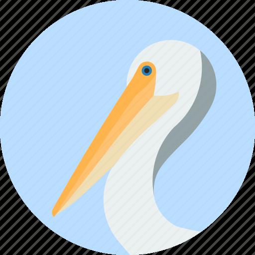 animal, beak, bird, exotic, pelican, tropical, wild icon