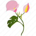 cale, exotic, flower, green, herb, pink, plant icon
