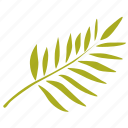exotic, green, herb, leave, plant, tree, tropical icon