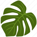 green, herb, monstera, plant, tree, tropical icon