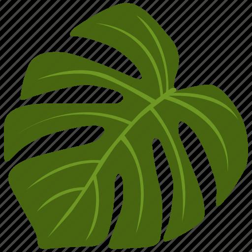 green, herb, monstera, plant, tree, tropical icon