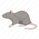 mouse, rat, animal, pet