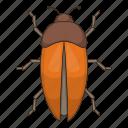 bug, insect, bee, orange