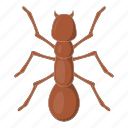 ant, insect, bug, sign icon