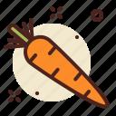 carrot, garden, vegetable