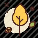 autumn, leaf, orig, outdoor, tree