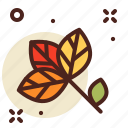 autumn, leaf, outdoor, tree