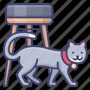 kitten, pet, cat, animal
