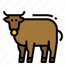 animal, bull, cow, farm