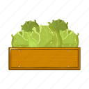 agriculture, box, cabbage, farm, vegetable, vegetable garden icon
