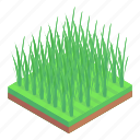 fields, rice plantation, harvesting, agriculture, rice cultivation