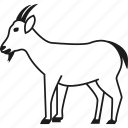 animal, farm, farm animal, goat icon