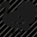 animal, farm, turkey, bird
