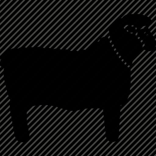 lamb, sheep, wool icon