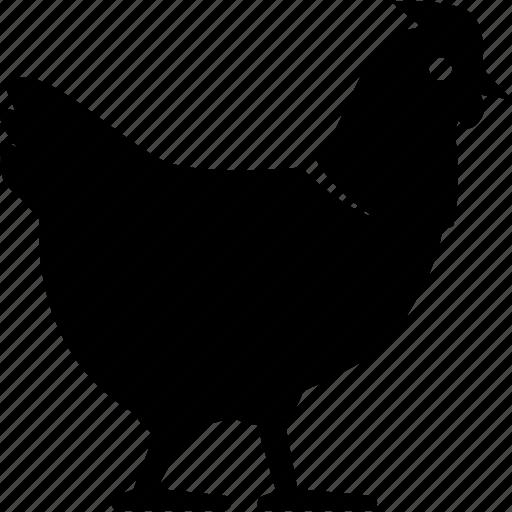 chicken, hen icon