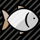 fish, fresh, protein, food, culinary